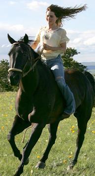 essay horse mustang Horse: horse, (equus caballus), a hoofed, herbivorous mammal of the family equidae it comprises a single species, equus caballus, whose numerous varieties are called.