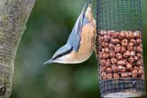 Garden of Feeding