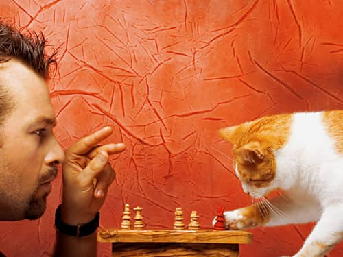 Man playing chess with a Calico cat