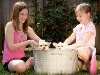 Teaching Responsibility, kids washing the dogs