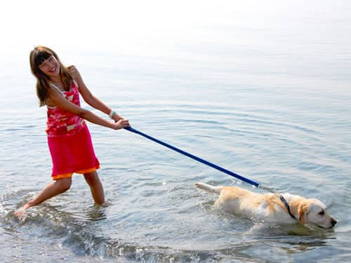 Girl Walking Dog in Water