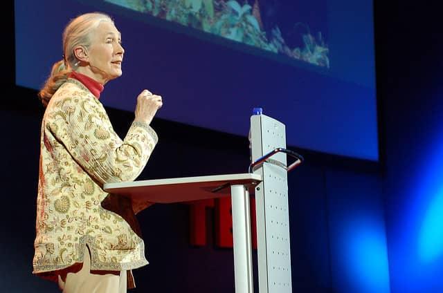 Jane Goodall, animal rights, animal activism, national geographic
