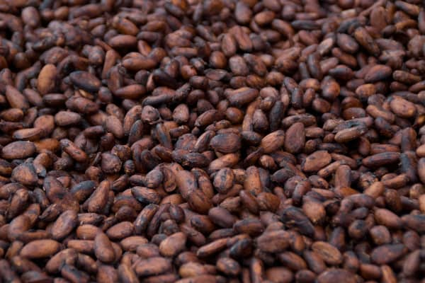 Cacao Beans