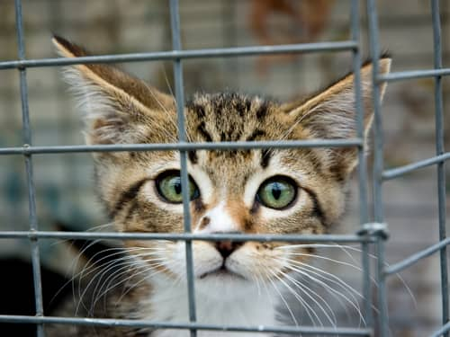 Pet Prayers: Scared kitten in a cage