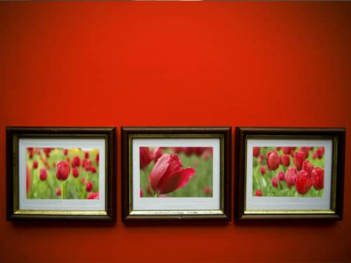 Framed flower photos