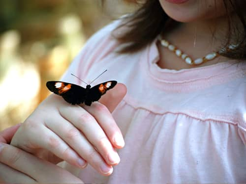 Teaching respect - girl with butterfly