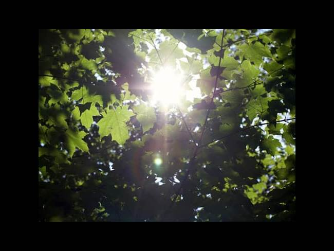 Sunlight filtered through leaves