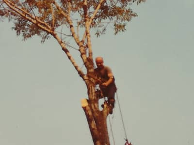 heartwarming stories dad up a tree