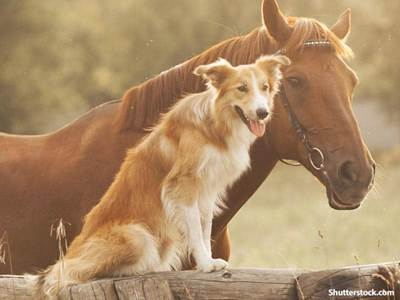 animals horse dog