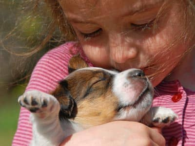 Little girl kissing a Jack Russell terrier