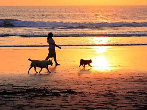 Woman with dogs walking on beach at sunset