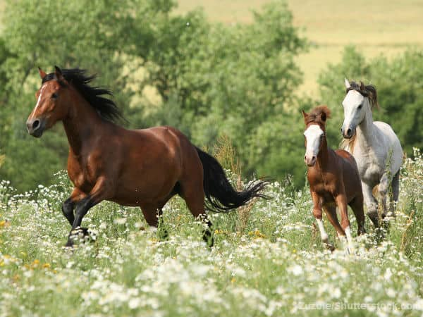 Horses cantering in field