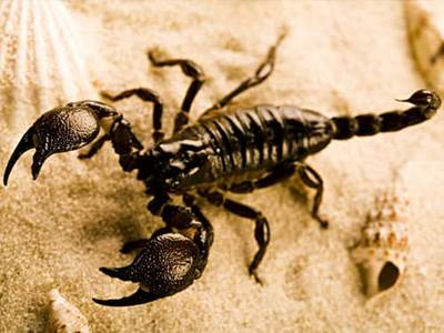 All About Scorpio