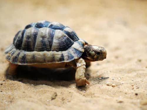 Tiny cute turtle