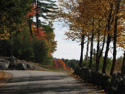 Path in nature autumn