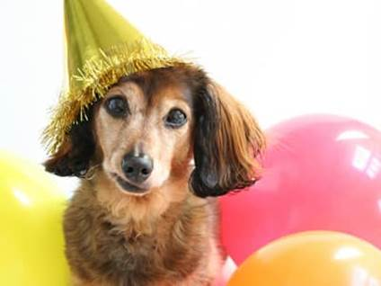 Dog with party hat and balloons