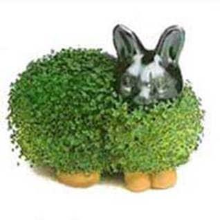 Chia Bunny