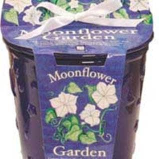Moonflower Cache Plot