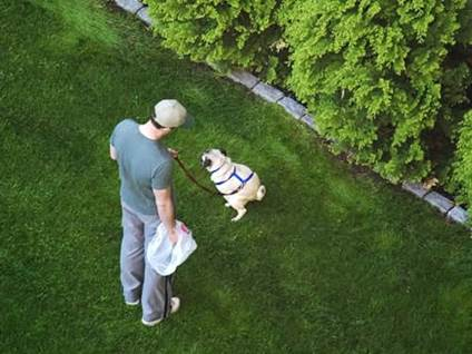 Man Cleaning Up After Dog