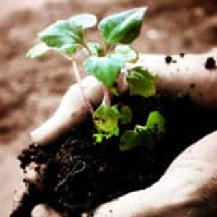 10 Ways to Grow