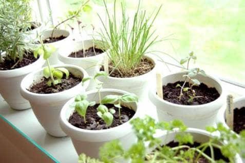 Herb Garden Cover Photo