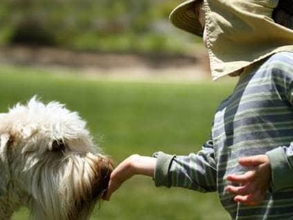 Little boy feeding a dog