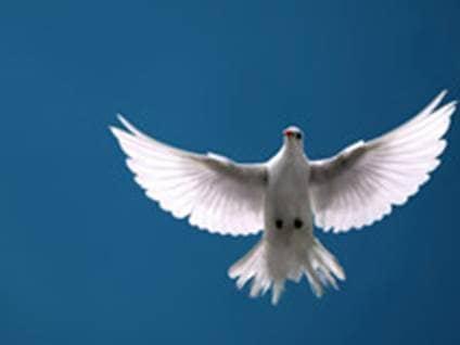 Trusting God help shield Dove heaven