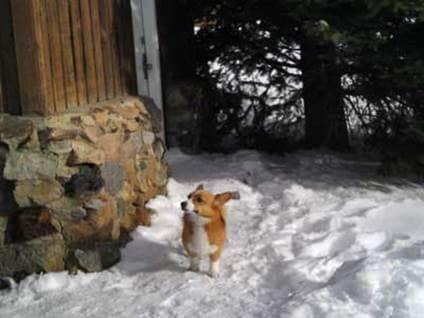 short dog stories